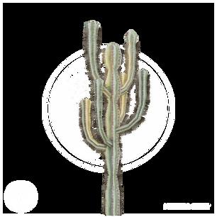 Cactus_9.png