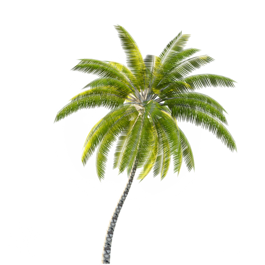 Coconut_palm_2.png