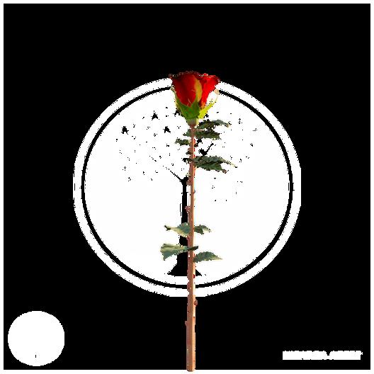 Rose_3.png