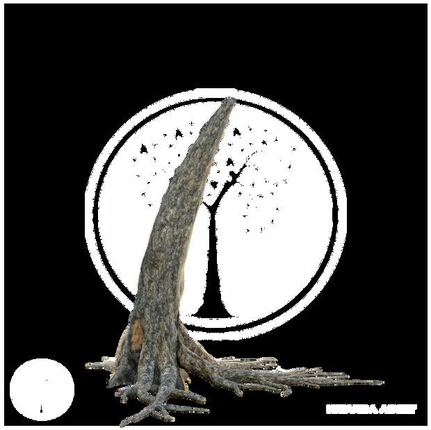 Acacia_tree_stump.png