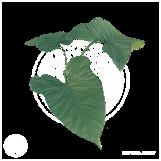 Vegetation1.png