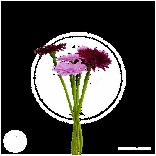 Indoor_plant_1.png