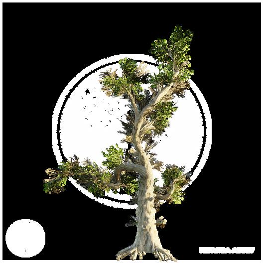 Honey_Tree.png