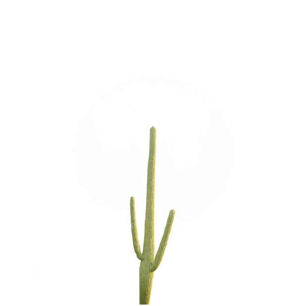 Cactus_6.png