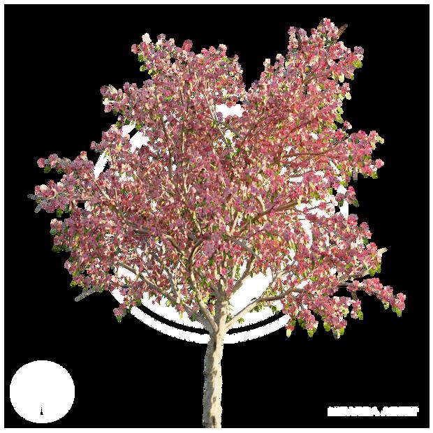 Peach_tree_1.png