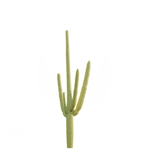 Cactus_2.png