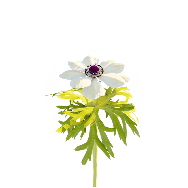 white_flower_2.png