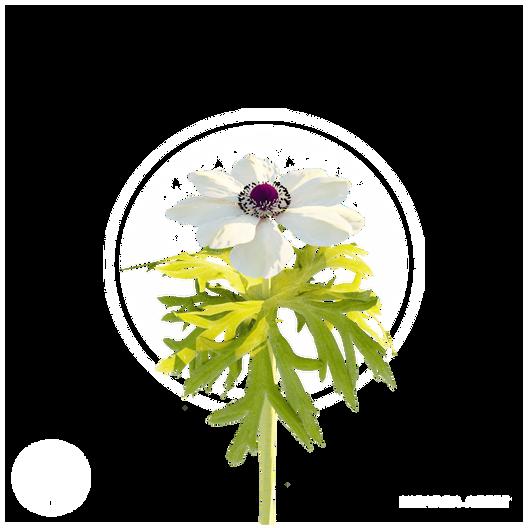 white_flower_2.png
