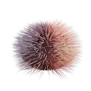 Purple_Sea_Urchin_1.png