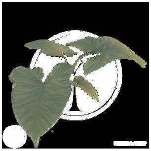Vegetation2.png