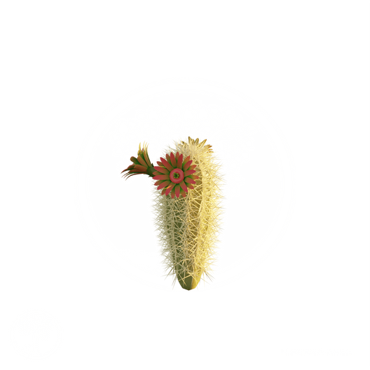 Small_Cactus.png