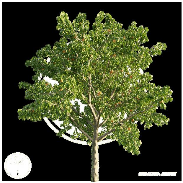 Peach_tree_2.png