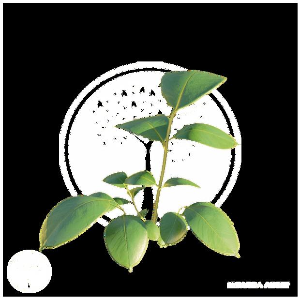 Vegetation10.png