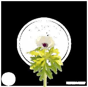 white_flower_1.png