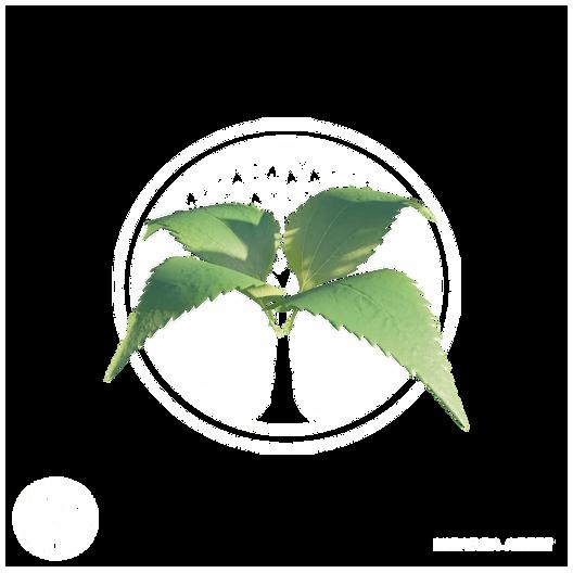 Vegetation7.png