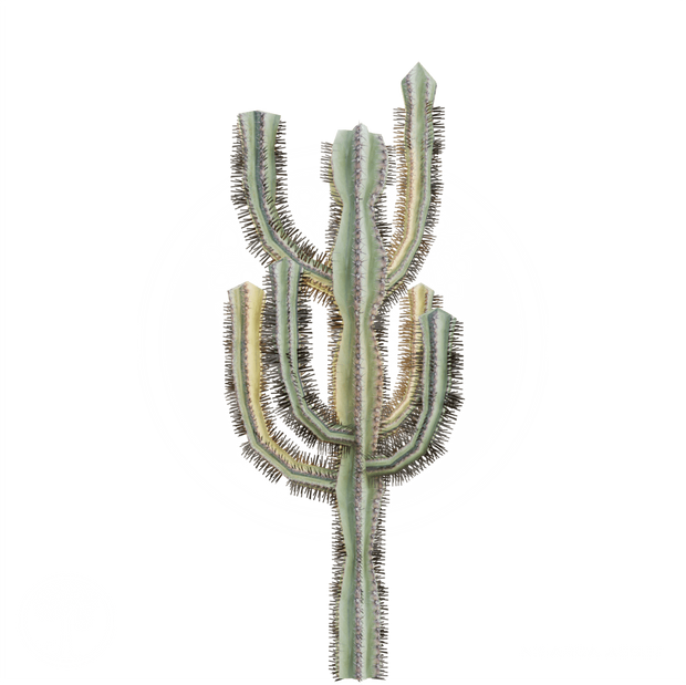Cactus_10.png