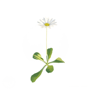 Common_daisy.png