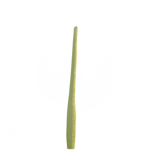 Cactus_3.png