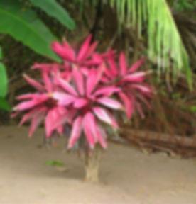 AFRICA FLOWER.JPG