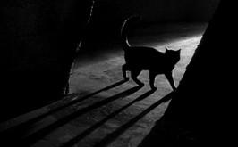 Un chat dans la nuit