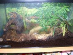 metamorphose axolotl, terrarium