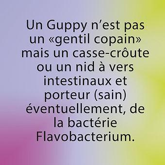 guppy porteurs sains bactérie, flavobacterium