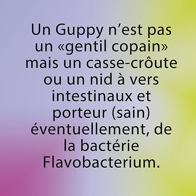 cohabitation interdite, axolotls, bacterie guppy