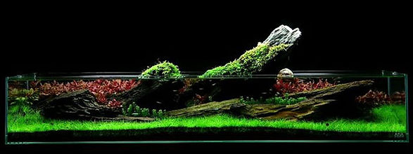 aquascaping, Takashi Amano, techniques
