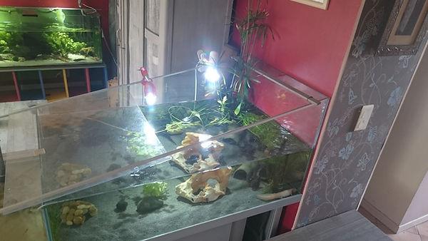 aquarium à débordement axoltols