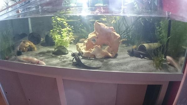 aquarium 980 litres