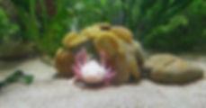 fabriquer cachettes pour axolotls