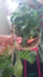 fabriquer un mur végétal