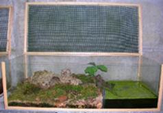 terrarium, metamorphose axolotl