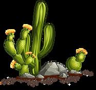 mexique, axolotls, prix, couleurs