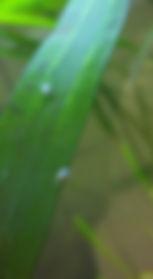 coques paois aquarium, axolotls, escargot