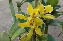 orchidee-vanille-full-13498945.jpg