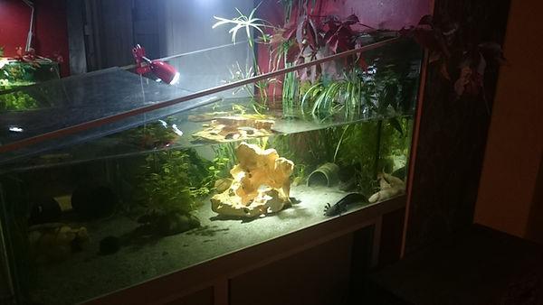 aquarium, mur végétal