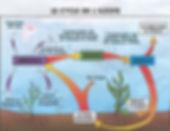 cycle azote aquarium axolotl