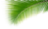 ambystomas, andersoni, mexicanum, axolotls, anoures, urodeles