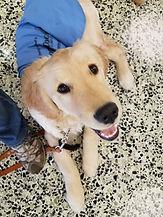 Future Leader Dog Polly