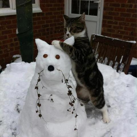 Cat with a cat snowman