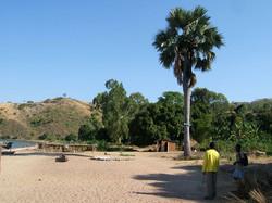 Cocoa Nut Palm Ruarwe Beach