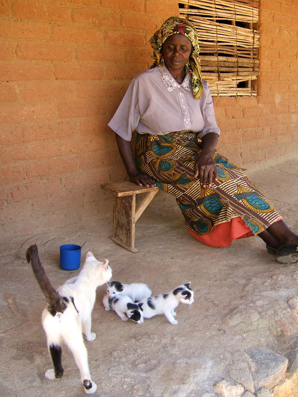 Mrs Mzuku and Kittens