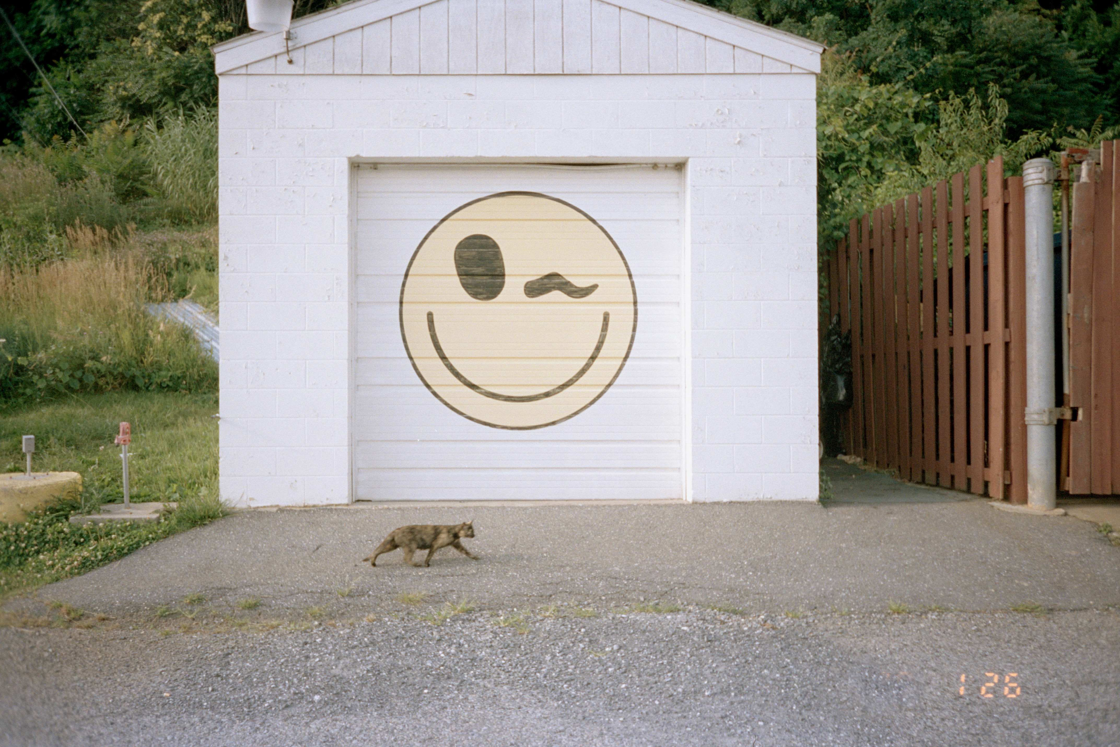 winkcat