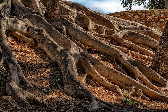 roots 4.jpg