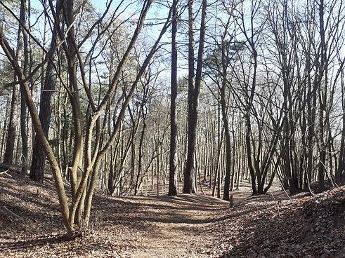 wandelcoaching mindfulness sandra schoonhagen amstelveen2.jpg