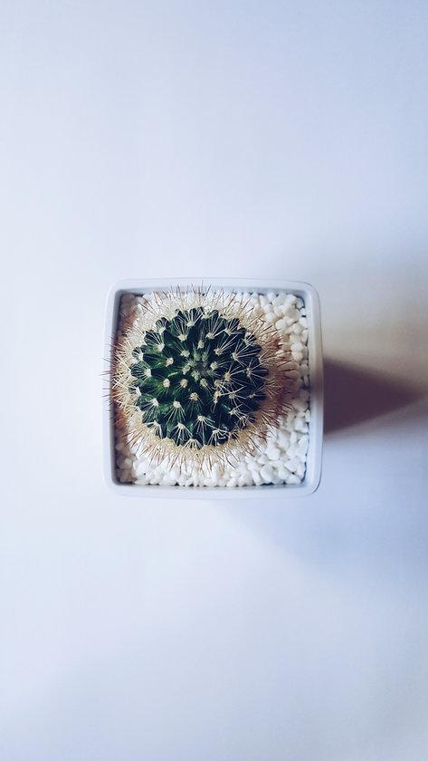 hoogsensitiviteit cactus - mindfulness e