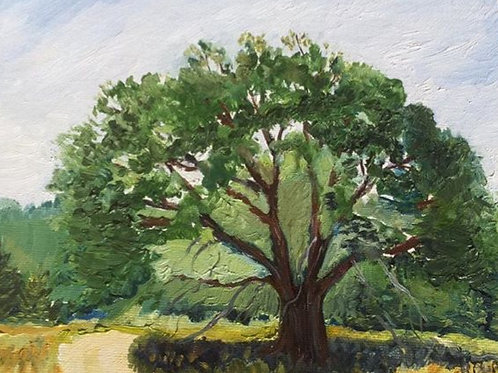 "King's Range, Shelter Cove, CA Tree 2 8x10"" original oil painting"