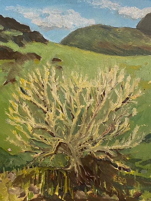 """Cholla 8x20"""" plein air oil painting"""