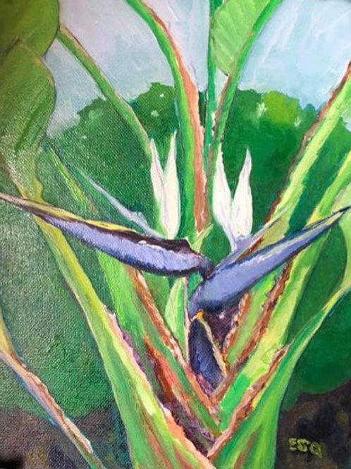 """Blue Bird of Paradise, Orange, CA 8x10"""" original oil painting"""